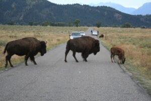 Edison Avenue buffalo